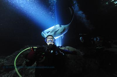 manta ray night dive (マンタナイトダイブ)