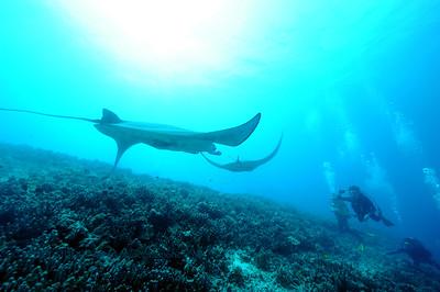divers and mantas (ダイバー達とマンタ達)