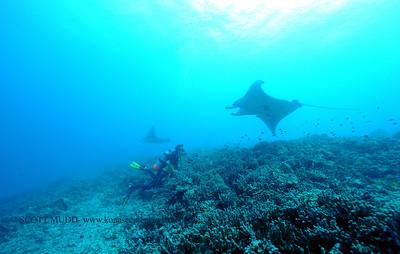 diver and mantas (ダイバーとマンタ達)