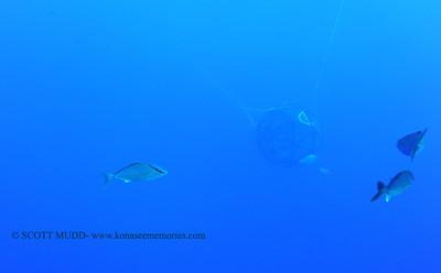 blue water dive (ブールウォーターダイブ)