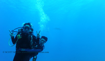 divers and dolphins (ダイバー達とイルカ達)