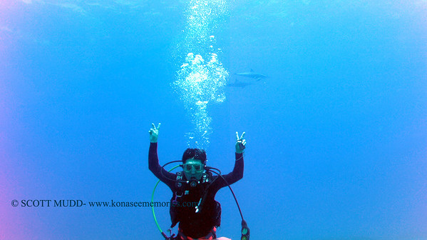 diver and dolphins (ダイバーとイルカ達)