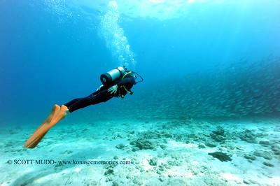 diver and bigeye scad (ダイバーとメアジの群)