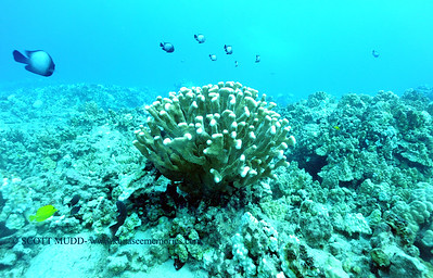 coral bleaching recovery greencan2 102515sun