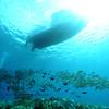 yellowfin goatfish (アカヒメジ