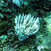 coral bleaching (珊瑚のブリーチング)