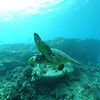 greenseaturtle turtleheaven6 112115sat