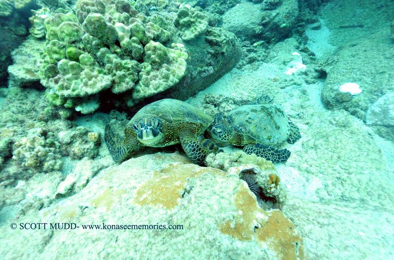 greenseaturtles turtleheaven2 112115sat