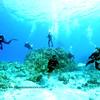 divers turtleheaven 110615fri