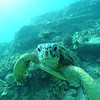 greenseaturtle turtleheaven2 112115sat