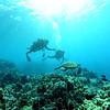 diver turtle turtleheaven 112815sat