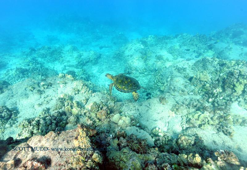 greenseaturtle turtleheaven2 112815sat