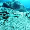 flounder turtleheaven2 111615mon