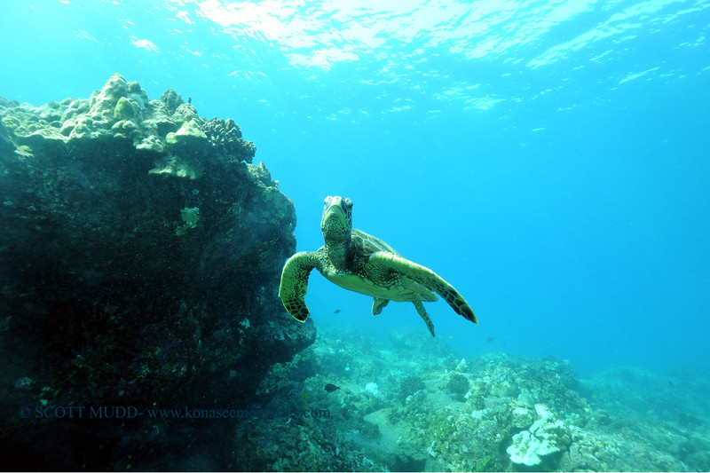 greenseaturtle turtleheaven3 110815sun