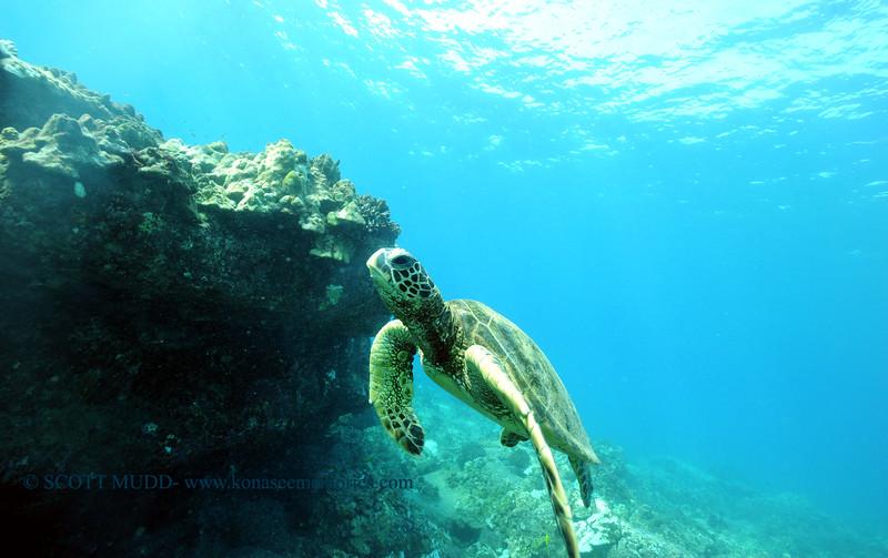 greenseaturtle turtleheaven 110815sun