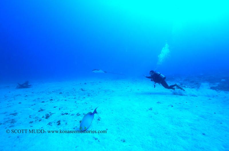 diver eaglerays naiabay 112115sat
