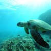 greenseaturtle turtleheaven7 112115sat