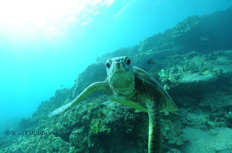 greenseaturtle turtleheaven3 112115sat