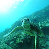 greenseaturtle turtleheaven3 112115sat