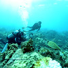diver turtle naiabay 110915mon