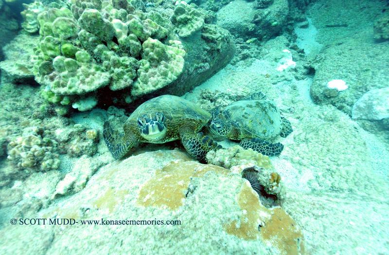 greenseaturtles turtleheaven 112115sat