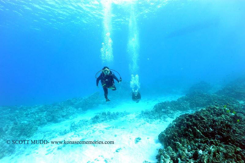 divers turtleheaven2 110815sun