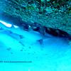 whitetipshark nakedlady 110715sat