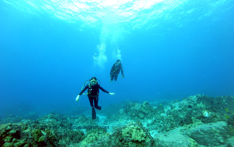 divers turtleheaven 112815sat
