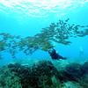 divers naiabay 112115sat