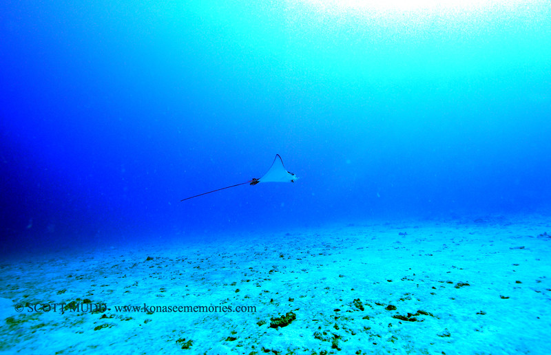 eagleray naiabay 112115sat