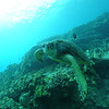 greenseaturtle turtleheaven4 112115sat