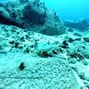 flounder turtleheaven 111615mon