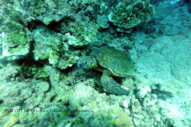 greenseaturtle turtleheaven 111615mon