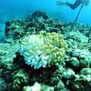 coral bleaching turtleheaven 110615fri
