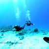 divers naiabay 111615mon