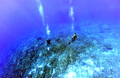 divers thunderreef 120815tues