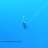 blue water diver (ブルーウォータダイバー)