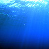 plankton (プランクトン)