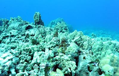 octopi (タコ達)