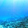 hellers barracuda (ヘラーズバラクーダ)