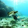 divers and greensea turtle (ダイバー達とアオウミガメ)