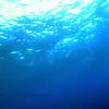 blue water dive (ブルーウォータダイブ)