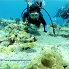 longspine porcupinefish (ネズミチョウチョウウオ)