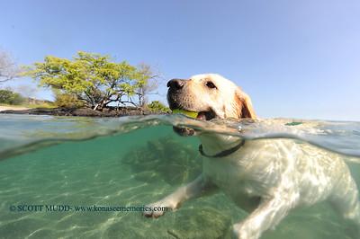 water dog (水犬)