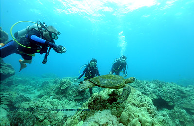 diver and turtle (ダイバーとカメ)