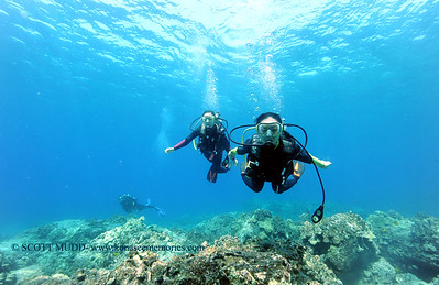 divers turtleheaven 101116tues