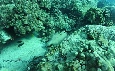 flounder turtleheaven4 100416tues