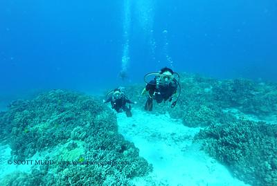 divers turtleheaven5 101116tues