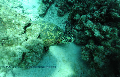 grenseaturtle turtleheaven 101116tues