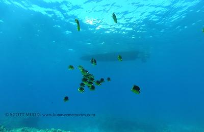 raccoonbutterflyfish turtleheaven2 102016thurs